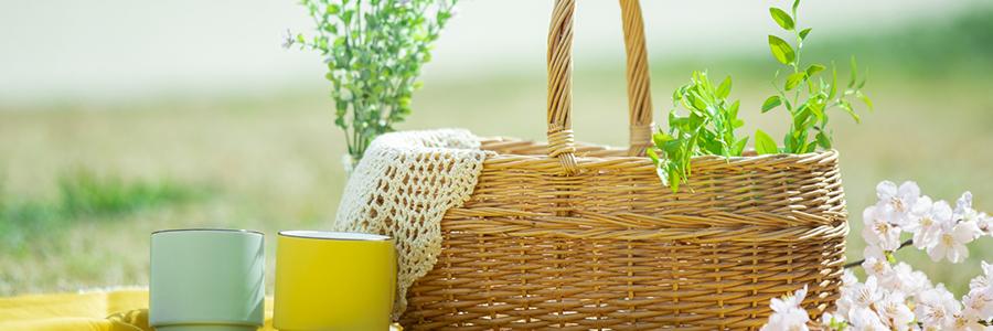 ピクニック中のランチ